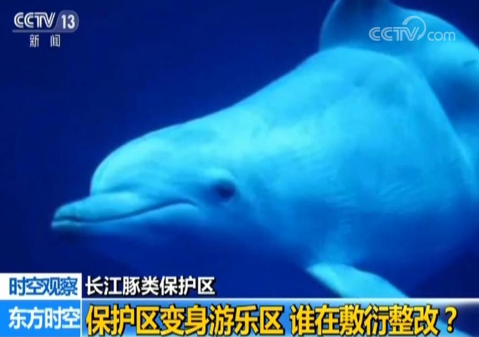 敷衍整改!江苏长江豚类保护变身游乐区 镇江市市长被约谈