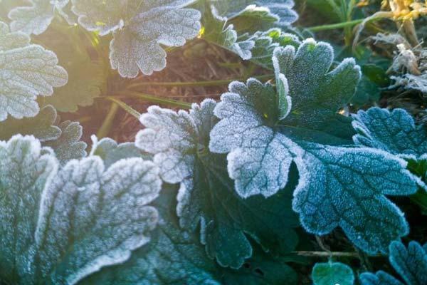 长春最低温度跌破冰点 花草被霜冻包裹晶莹剔透
