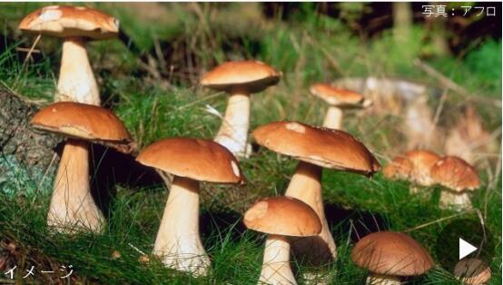独自一人慎入山林!日本长野县今年已有13人因入山林采蘑菇不幸遇难