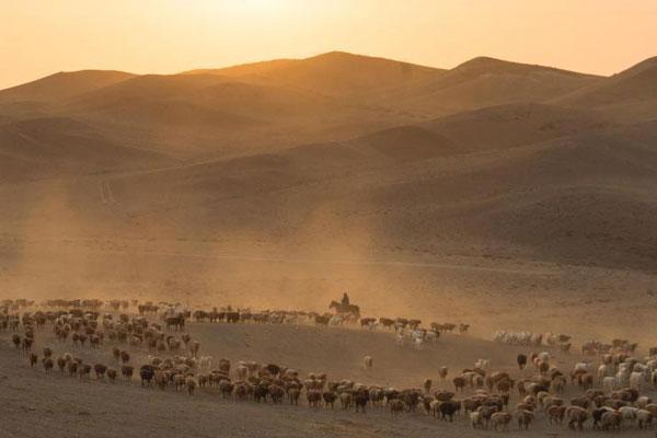 新疆福海哈萨克族牧民秋季转场