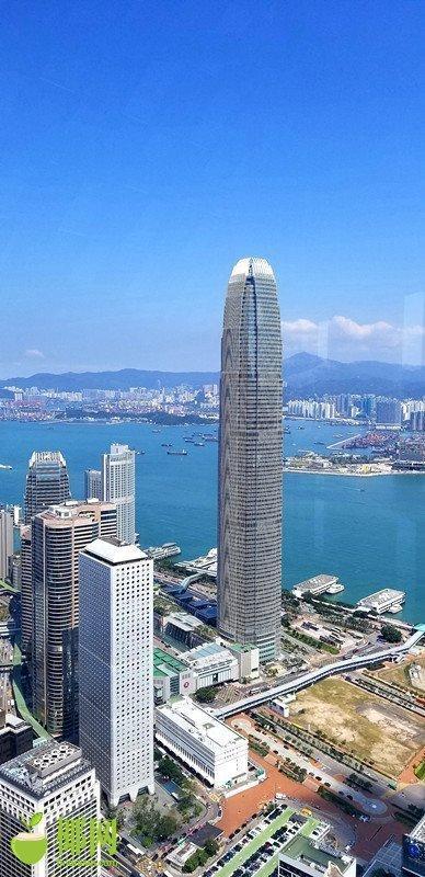 """香港自贸港见闻(1):我被""""唔该""""撞了一下腰"""