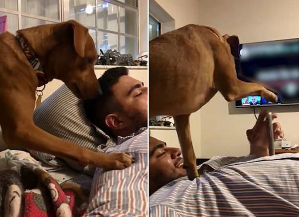 """萌趣!美国一男子玩手机遭宠物狗""""出手""""制止"""