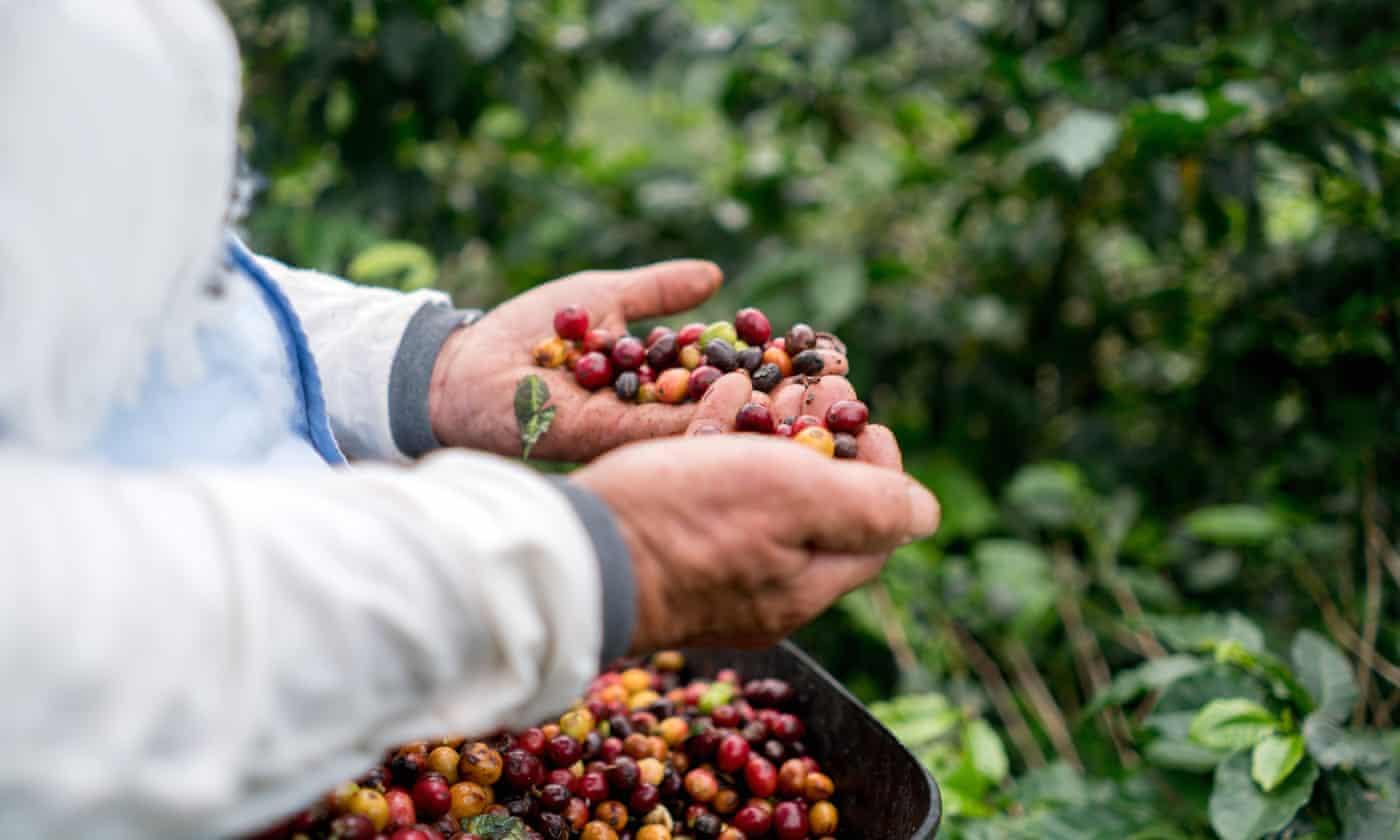 英开发微生物燃料电池 可将咖啡废料转化为电能
