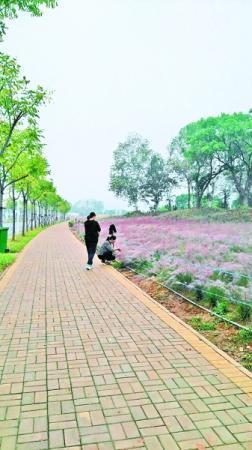 武汉网红草很安全:游人如织花开依旧