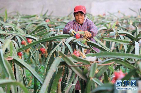 河北平山:农业园区助力脱贫致富