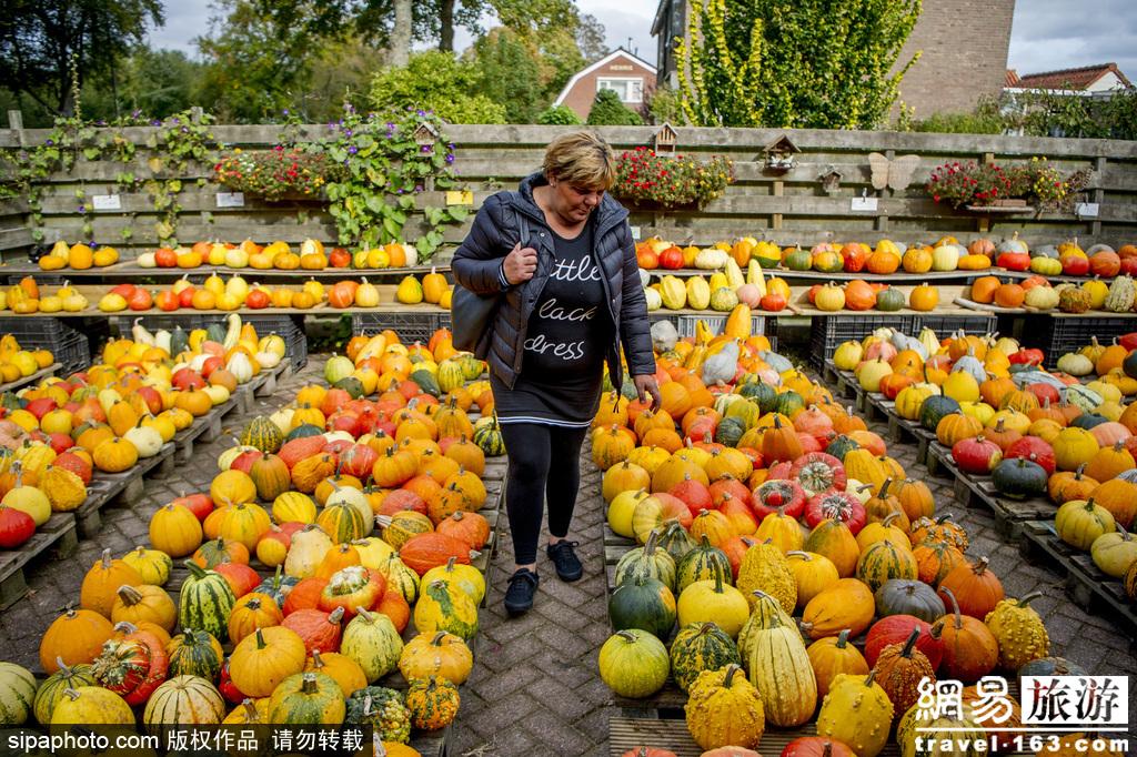秋天是南瓜的季节!各色南瓜让人眼花缭乱