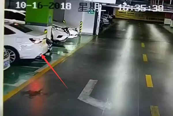 """警方通报""""女司机倒车连撞豪车"""":驾龄2年,事后主动报警"""