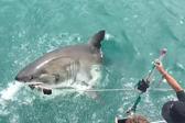 南非大白鲨跃出海面咬走鱼饵吓坏游客