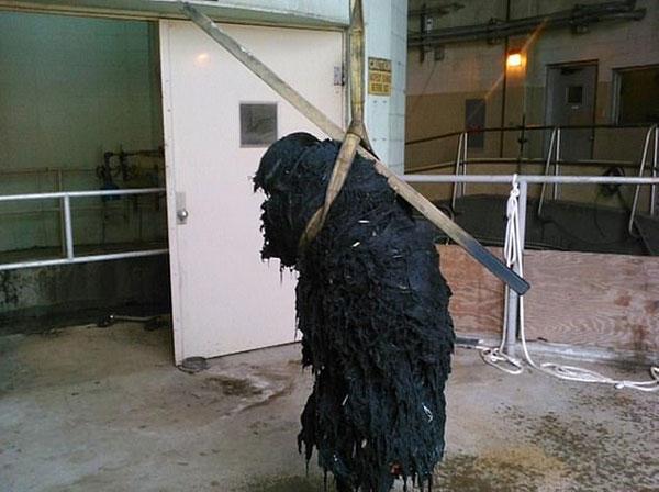 触目惊心!美污水处理厂每天打捞出1吨污物