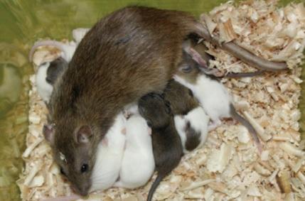 中国科学家证明同性哺乳动物也能实现生殖