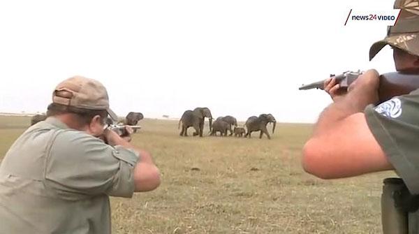 猎人射杀非洲野象险遭象群回击仓皇而逃