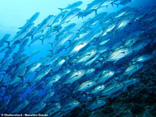 美研究:多吃鱼可降低老年人心脏病与痴呆症患病率