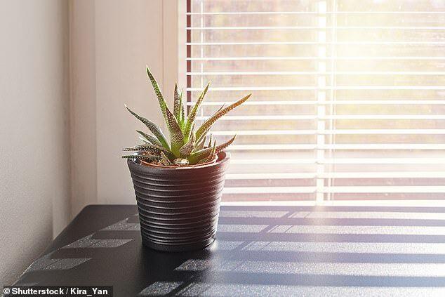 美研究:阳光是最好的消毒剂