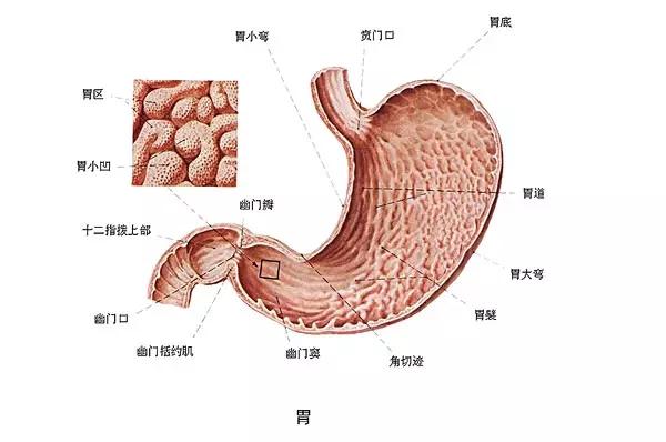 从胃炎到胃癌,仅仅只有4步!