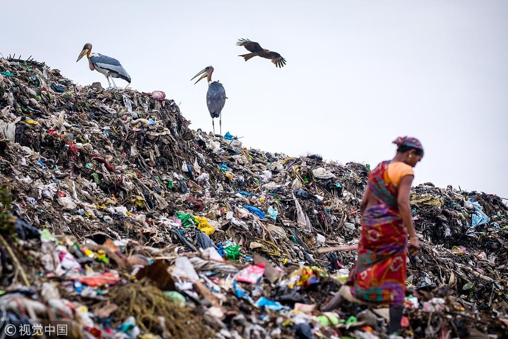 濒危秃鹳栖身印度最大垃圾场 与拾荒者和谐相处