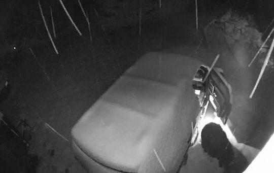 这只熊太调皮 雪夜中将汽车车门打开后扬长而去