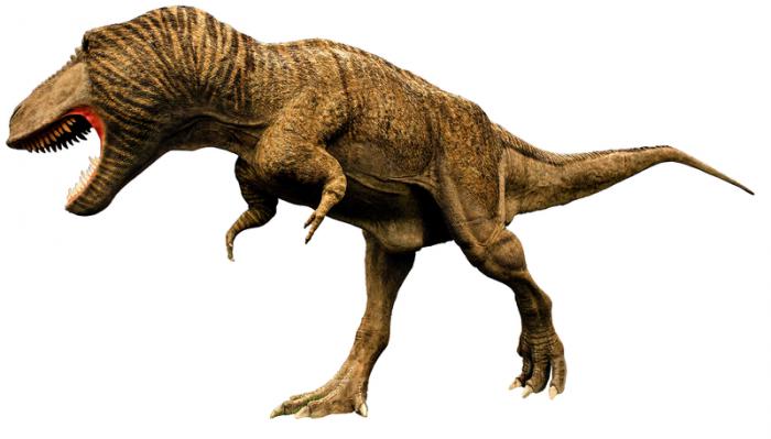 最新研究发现霸王龙的前肢可能比看起来更加有用
