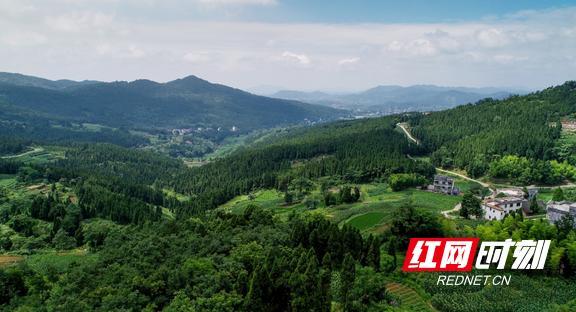 """隆回:一纸""""禁令""""增加93万立方米森林"""