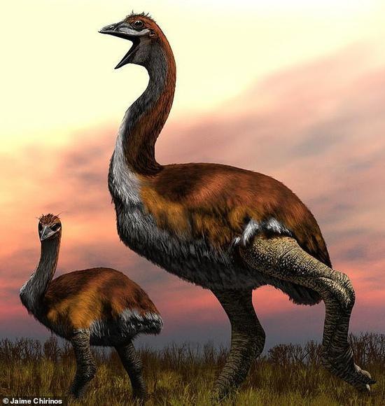 有史以来最大的鸟:一颗蛋能做50个煎鸡蛋