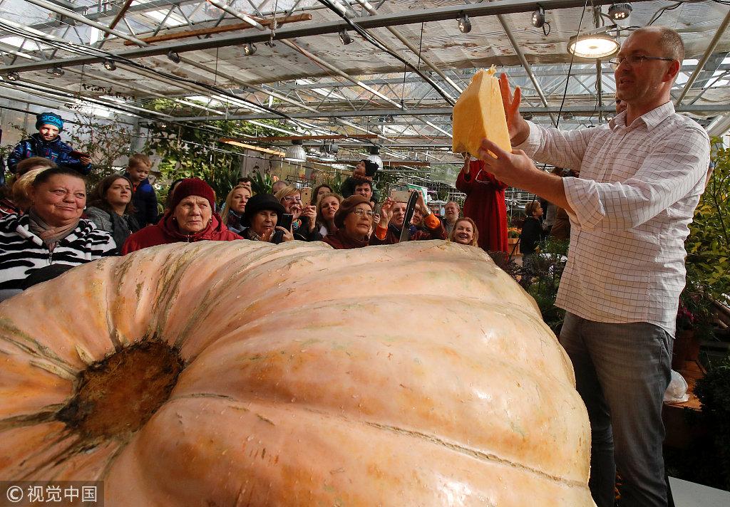 """俄民众见证""""南瓜皇帝""""切割仪式 重达645公斤需多人环抱"""