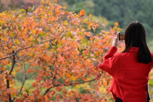 北京香山红叶节开幕后迎首个周末客流高峰