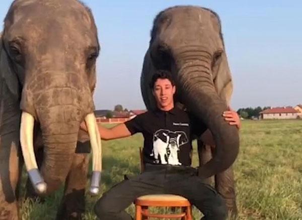 惊人技巧!杂技团大象扣篮转呼啦圈技艺高超