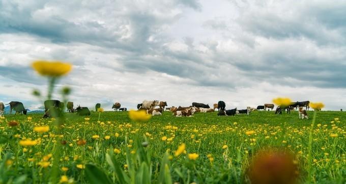 地貌多样性的草原,这样的天气太美!