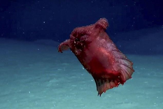 """""""无头鸡怪""""首次在南极洲深海被发现"""