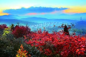 北京将推21处赏红景区 10月中下旬进入最佳观赏期