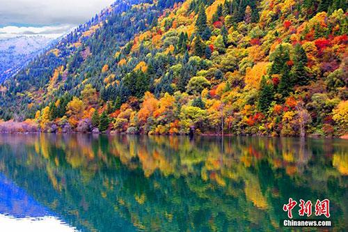 金秋季节赏秋色 黑水彩林引人醉