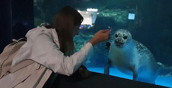 萌翻了!韩水族馆海豹跟着游客钥匙扣摆动脑袋