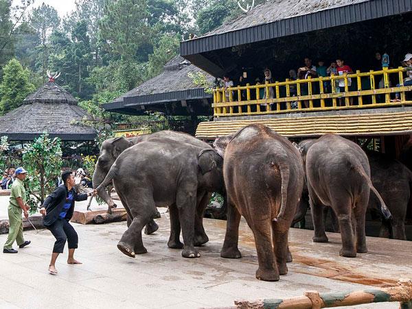 残忍!印尼动物园刺伤大象鼻子让其为游客表演