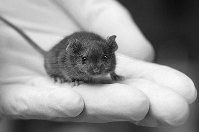 俄罗斯科学家利用老鼠研发新型测癌装置