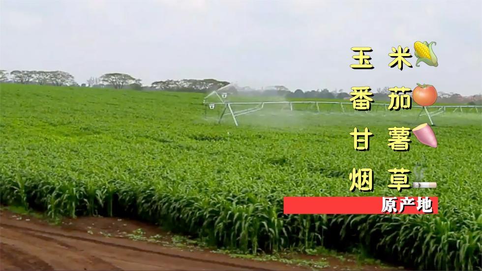"""进博会主宾国⑦:""""森林奶油""""独占33%全球市场"""