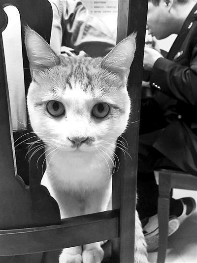 """流浪猫成工商所""""公务猫"""" 靠抱大腿调解纠纷"""