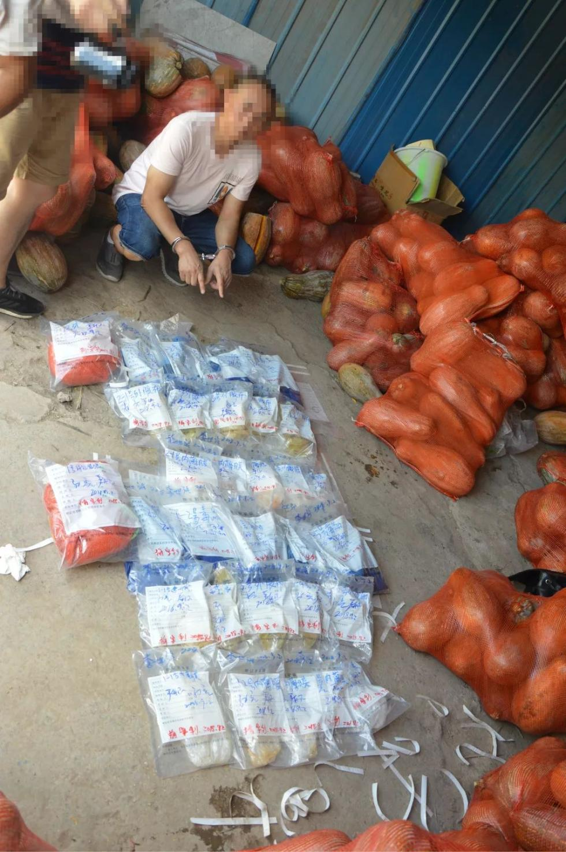 重庆警方破获一运输毒品案,2.8千克毒品藏身20吨南瓜中