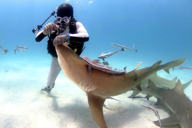 柠檬鲨不慎咬鱼钩被困 获潜水员暖心解救