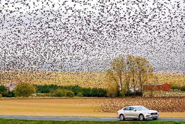 法国大批椋鸟密集飞行 壮观场面令人惊叹