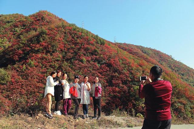 安康汉滨区早阳镇的满山红叶