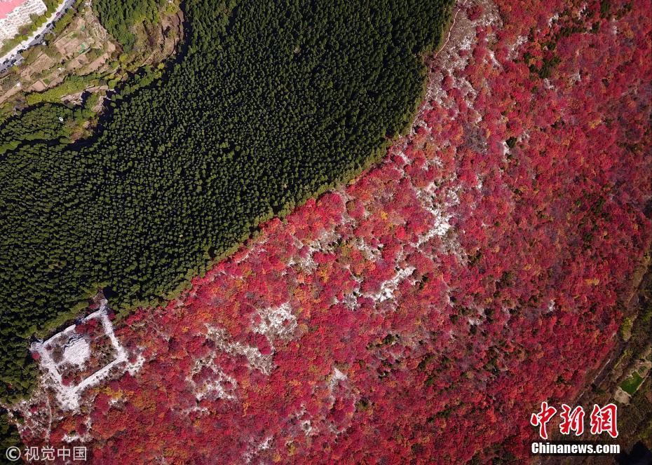 山东济南楔子山半山红叶半山绿