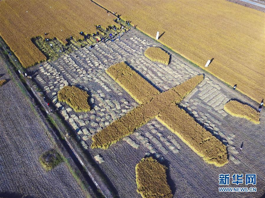 江苏泗洪:稻田里的运动会