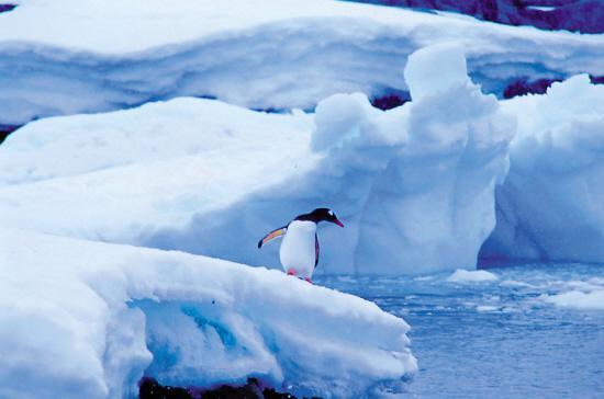 另类旅行 南极旅游要知道的内容有哪些?