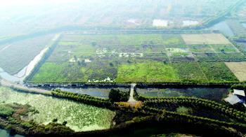 湿地处理工艺让污水变清流