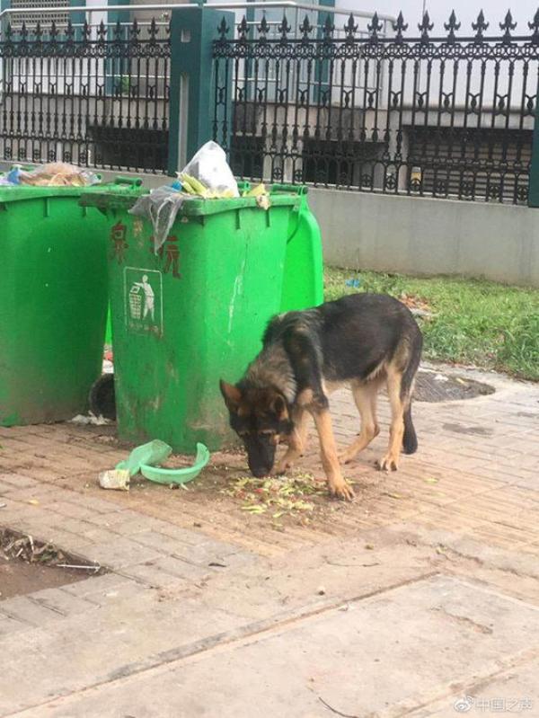 """警犬丢了还是被偷了,派出所岂能""""将错就错""""?"""