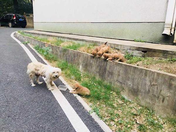 中南民族大学回应校内疑似出现虐狗事件:消息不属实