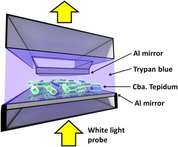 科学家解释活细菌与光之间的量子纠缠现象