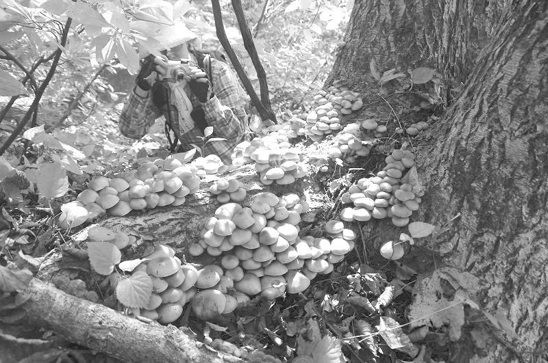 日本人秋天爱上采蘑菇