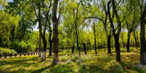 """探索学习模式:看看北京的这所""""森林幼儿园"""""""