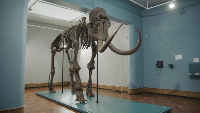 利用3D打印技术为博物馆打造出猛犸象巨型骨架