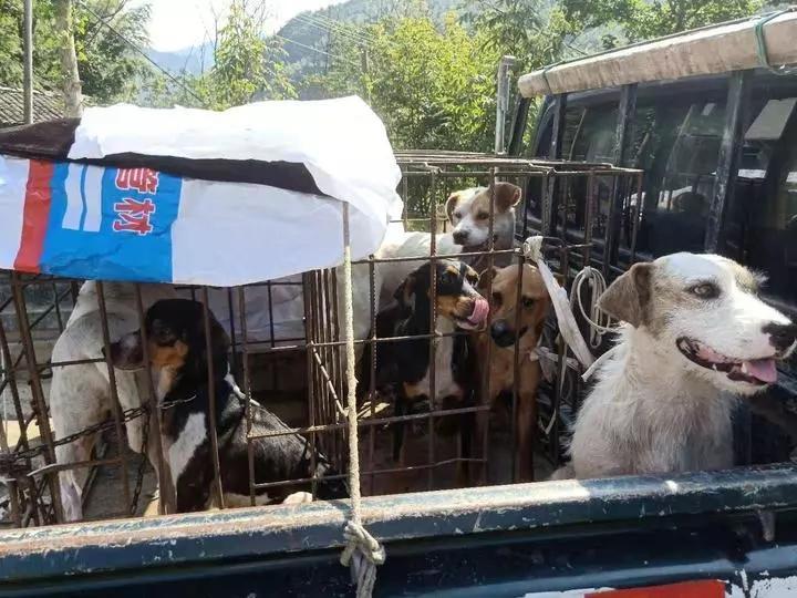 专门训练猎犬上天目山抓了14只黄缘闭壳龟,杭州三男子被捕